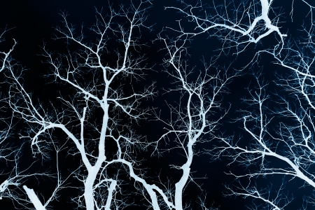 The bare branches of trees. Negative image. photo