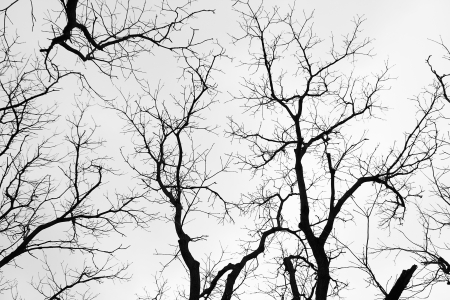 bare branches of trees in black and white tone photo