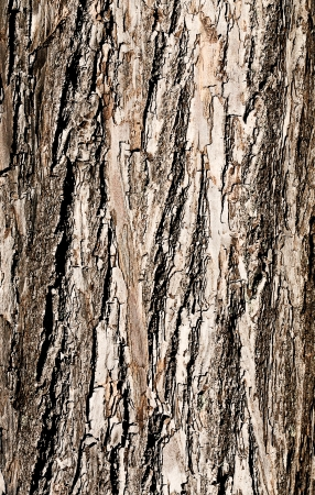 The bark of a tree closeup. Stock Photo - 16719298