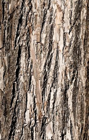 The bark of a tree closeup. Stock Photo - 16719298