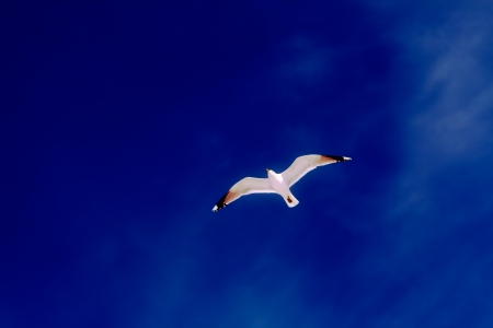 The seagull against the sky. Stock Photo - 16681536