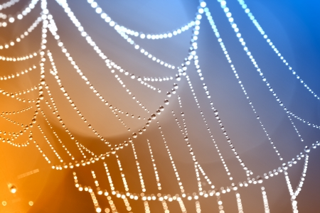 The Spider Web close up