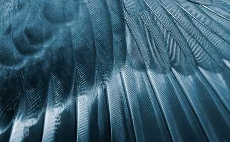 The wing of the bird closeup. Cyan color tone. photo