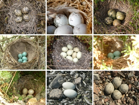 Collage - nests of birds in nature photo