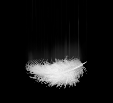 falling white feather on a black photo
