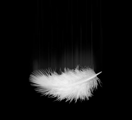 falling white feather on a black Stock Photo