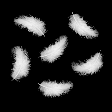 some white feathers on a black photo