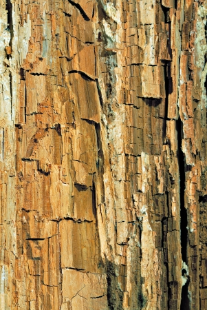 background of a mouldering wood close up Stock Photo - 17219146