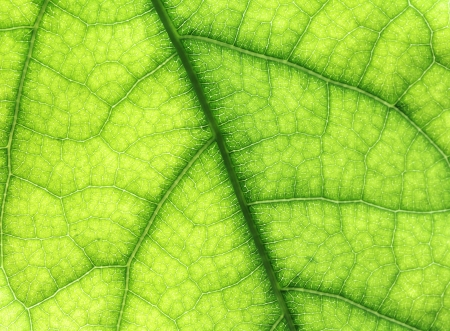 vitality: The leaf close up. Abstract background.
