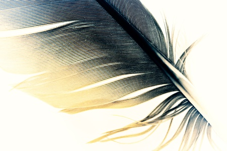 pen feather close up, effect of old photo photo