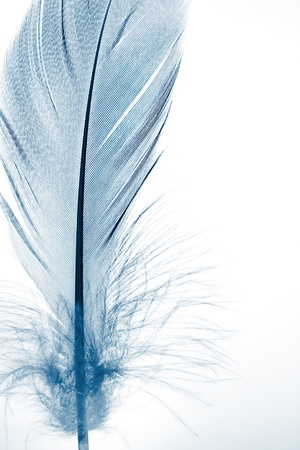 The blue feather close up. photo
