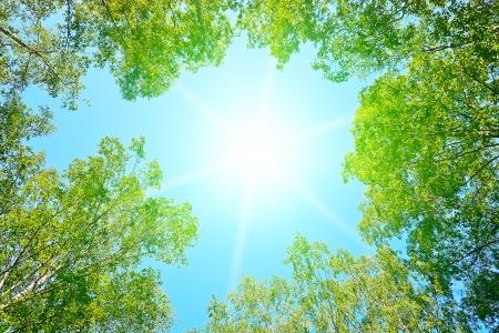 low angle views: sol en un bosque - bajo �ngulo de disparo