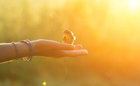 concetto di ecologia - uccello su una mano al mattino