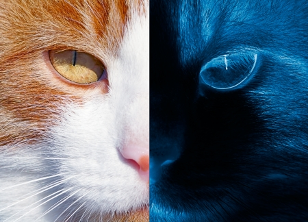 Health and Medicine concept - Acute Eyesight  Portrait of the red cat in the day and night  photo