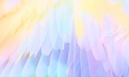 abstract background - multicolored wing closeup photo