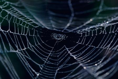 闇の中にクモの巣のクローズ アップ