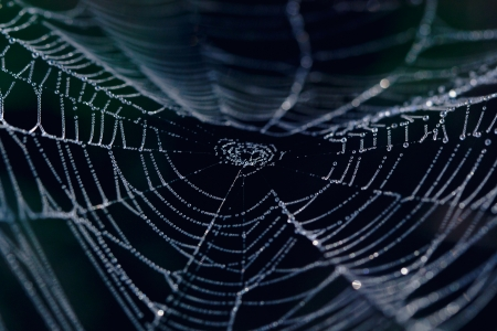 The Spider Web closeup in a darkness Stok Fotoğraf