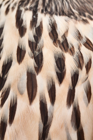 hawk plumage background close up photo