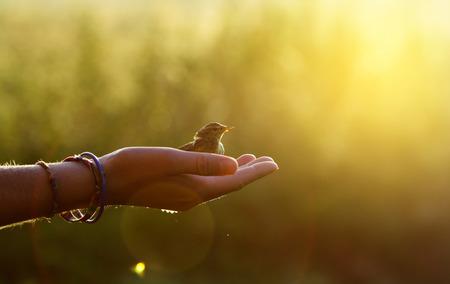 Ökologie-Konzept - Vogel auf einer Hand in den Morgen