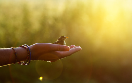 ecology concept - bird on a hand in the morning 스톡 콘텐츠