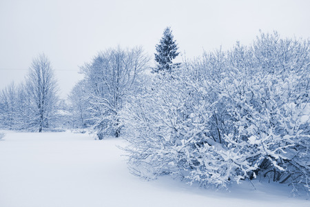 snowbound forest in the cloudly day photo