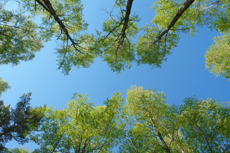 directly below: forest - low angle shot in summer