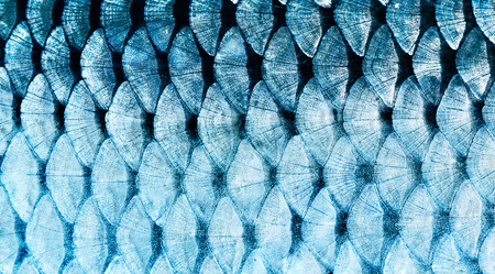 The fish scale close up.