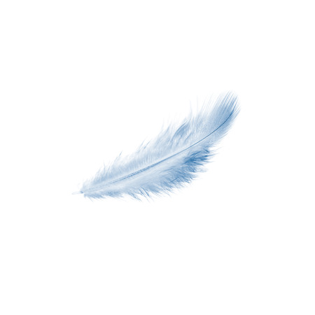 blue feather isolated on a white