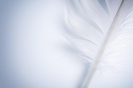 白い紙の上の青い羽の一部 写真素材