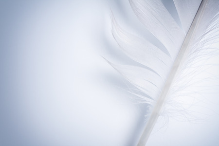 part of blue feather on a white paper Zdjęcie Seryjne - 26381736
