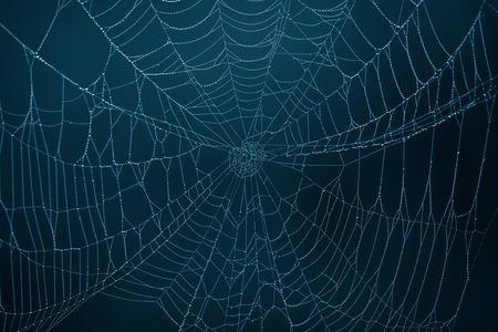 暗闇の中でクモの巣 写真素材