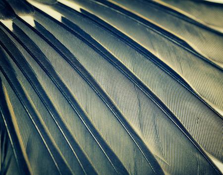 bird wings: wing of the bird closeup, cross-processing effect Stock Photo