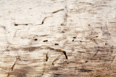 burrow: wooden pattern of an old log with burrow Stock Photo