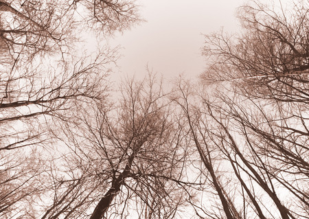 bare branches of trees in sepia photo