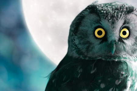 Boreal Owl against the moon at night Imagens