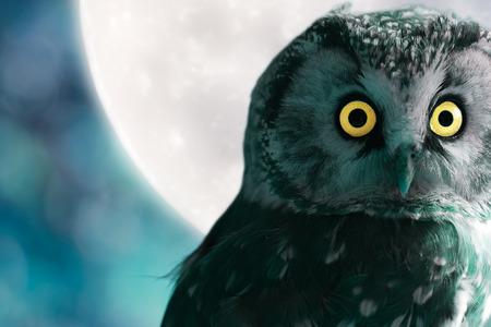 Boreal Owl gegen den Mond in der Nacht Standard-Bild - 27306235