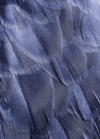 piume: sfondo piume di uccello primo piano