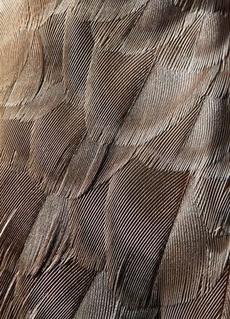 plumage background of bird closeup photo