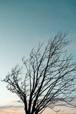 silhouette of a tree at sunset in the wind