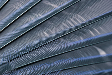 color tone: wing of bird close up, blue color tone