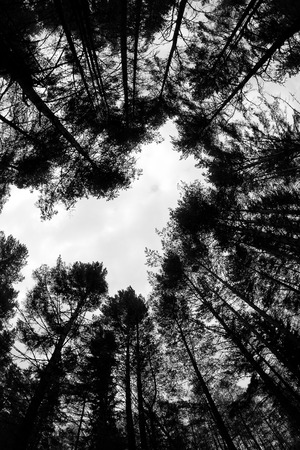 fish eye lens: forest - low angle shot in summer, fish eye lens, in the shape of heart, black and white