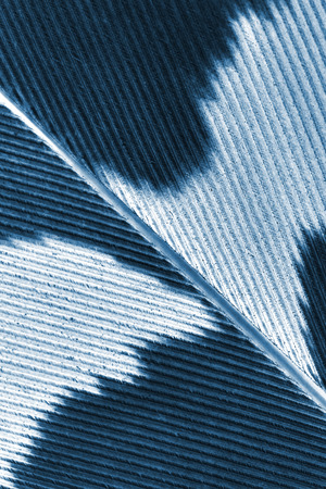 pen feather fragment close up, x-ray effect, concept - silhouette of bear and eagle