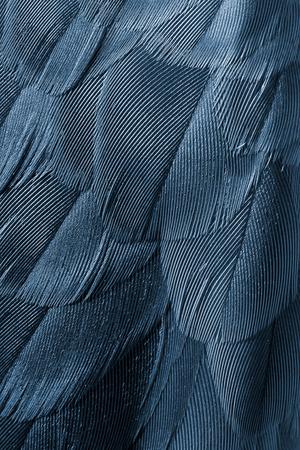 piume: sfondo piumaggio uccello primo piano