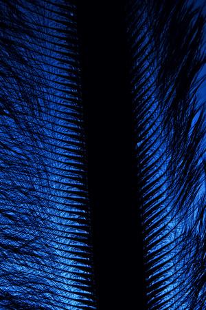 siluetas: pen feather fragment in the dark close up