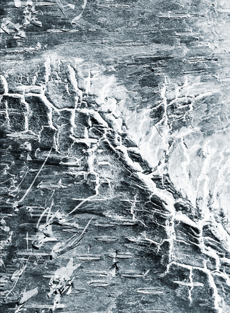 social grace: abstract background of a birch bark close up, x-ray effect