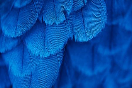 peří pozadí pták zblízka