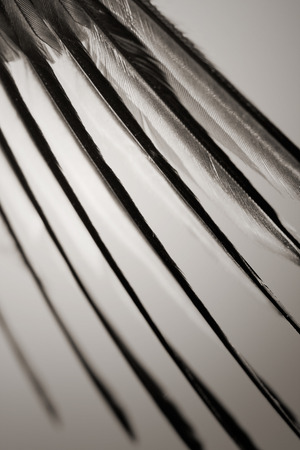 color tone: wing of bird in flight, sepia color tone