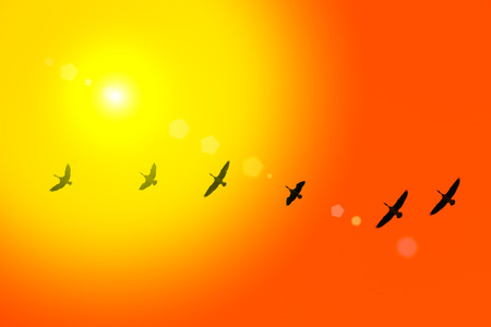 siluetas: The wild-gooses to fly against sky background in time of migration on sunrise.