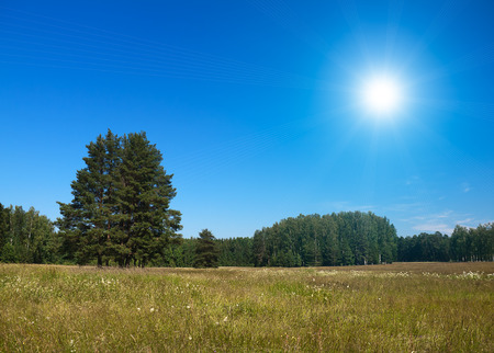 summers: summers landscape in a clear day Stock Photo