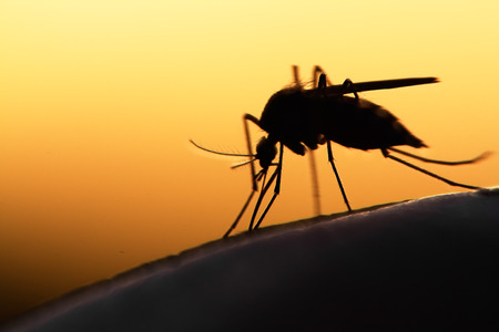 gnat: mosquito on human skin at sunset
